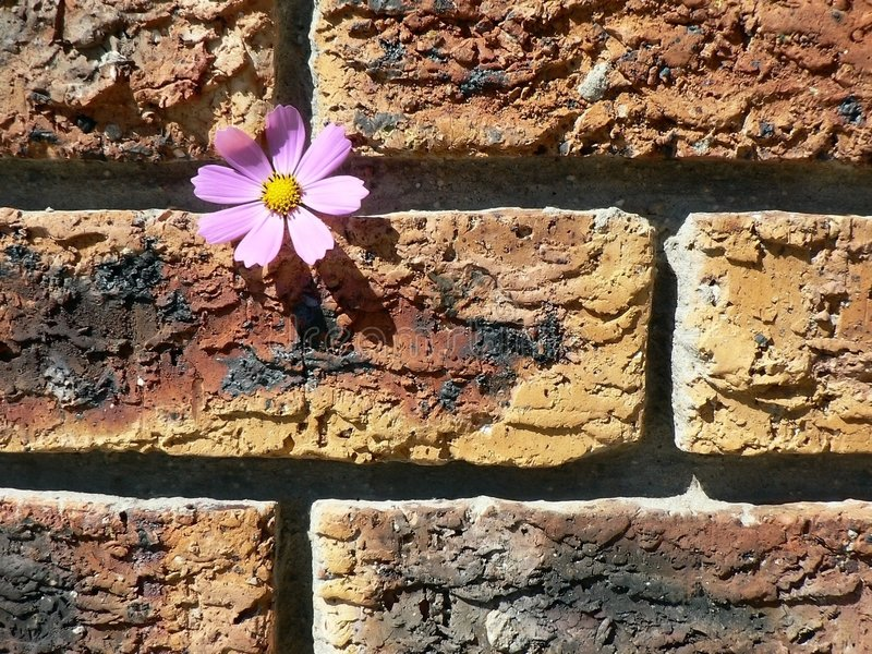 Download Cosmos on Brick Wall stock photo. Image of building, rustic - 1400814