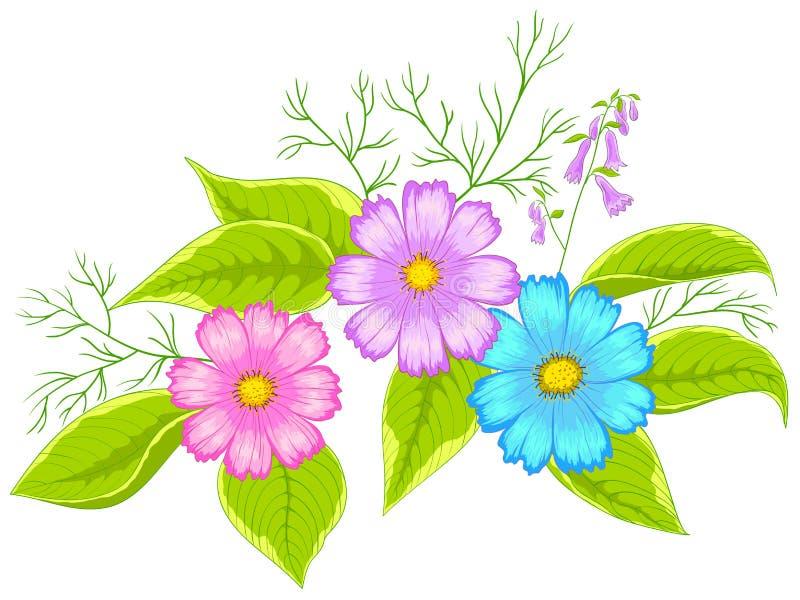 Cosmos da flor ilustração do vetor