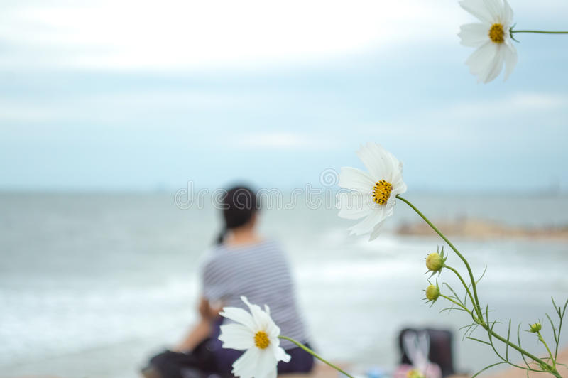 Cosmos flower with a girl background. In seaside stock photography
