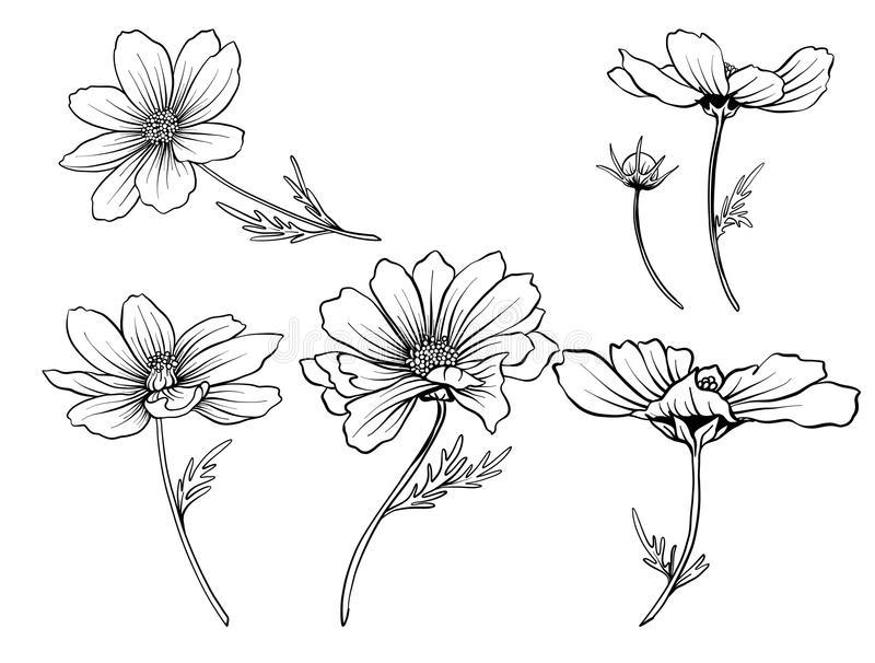 Download cosmos flowers set of outline flowers stock vector illustration of icon