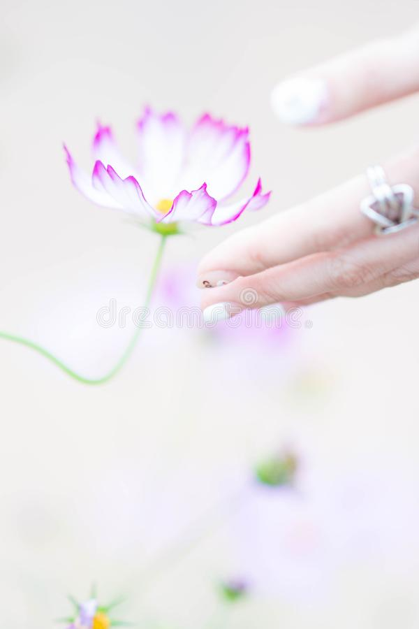 Cosmos and Hand royalty free stock image