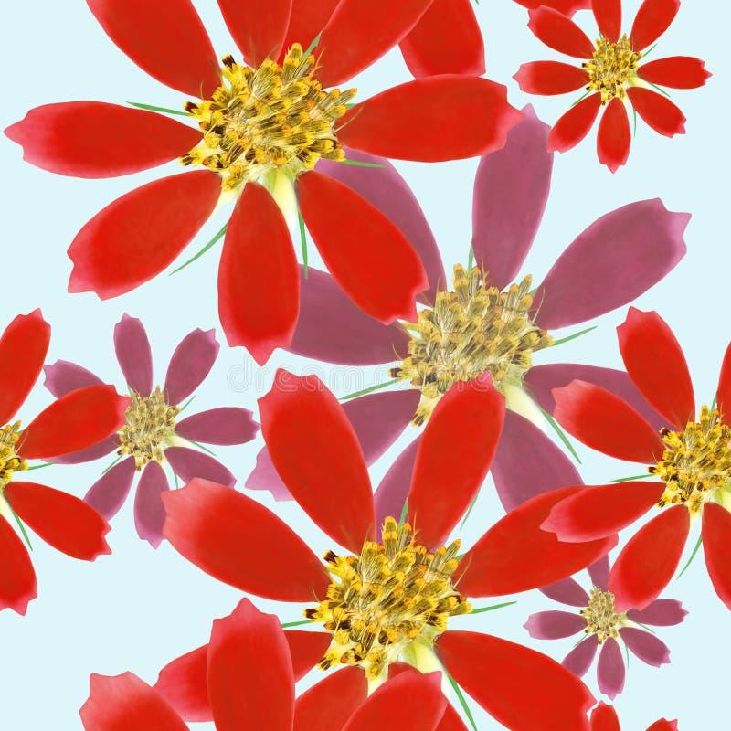 cosmos Textura sem emenda do teste padrão das flores Fundo floral, colagem da foto ilustração do vetor
