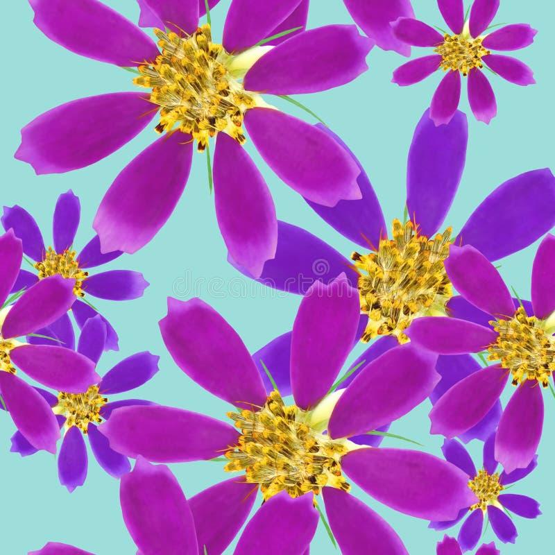 cosmos Textura sem emenda do teste padrão das flores Fundo floral, colagem da foto ilustração stock