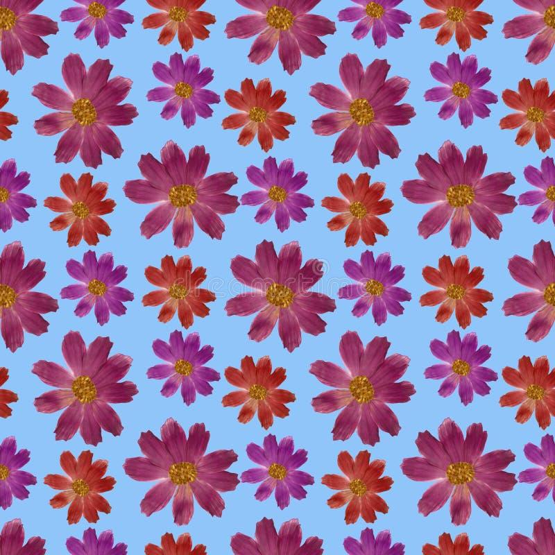 cosmos Textura sem emenda do teste padrão das flores Fundo floral, vetor ilustração do vetor
