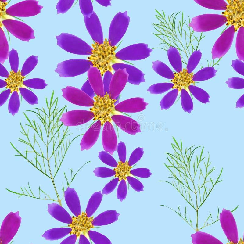 cosmos Textura sem emenda do teste padr?o das flores Fundo floral, colagem da foto ilustração stock