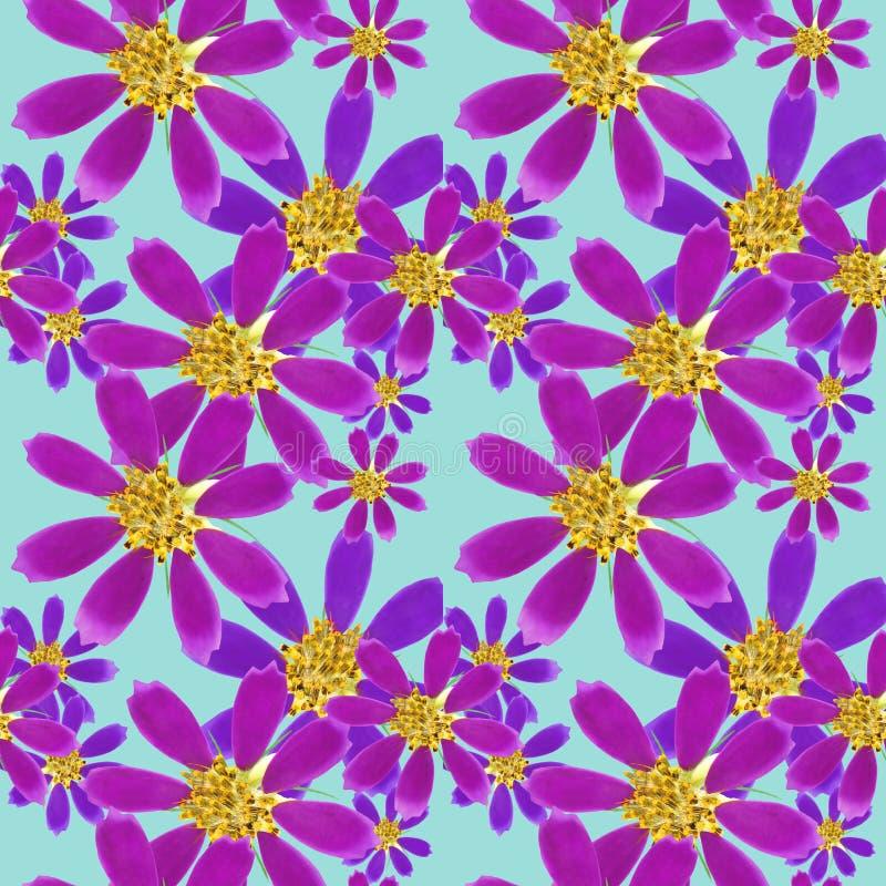 cosmos Texture sans couture de modèle des fleurs Fond floral, collage de photo illustration stock