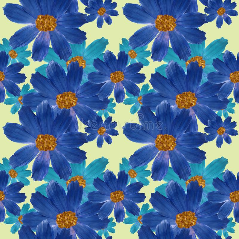 cosmos Texture sans couture de modèle des fleurs Fond floral, vecteur illustration de vecteur
