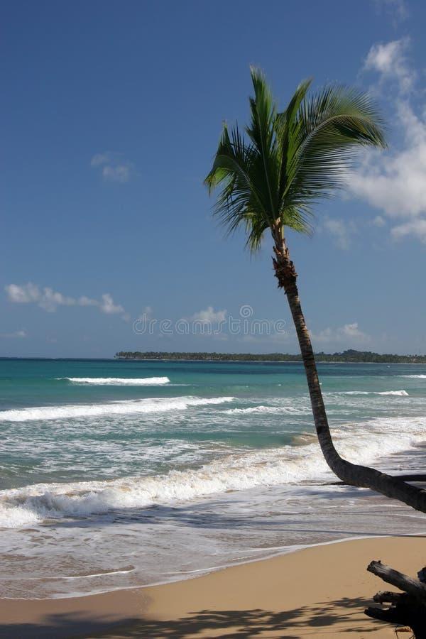 Coson beach, Dominican Republic royalty free stock photos
