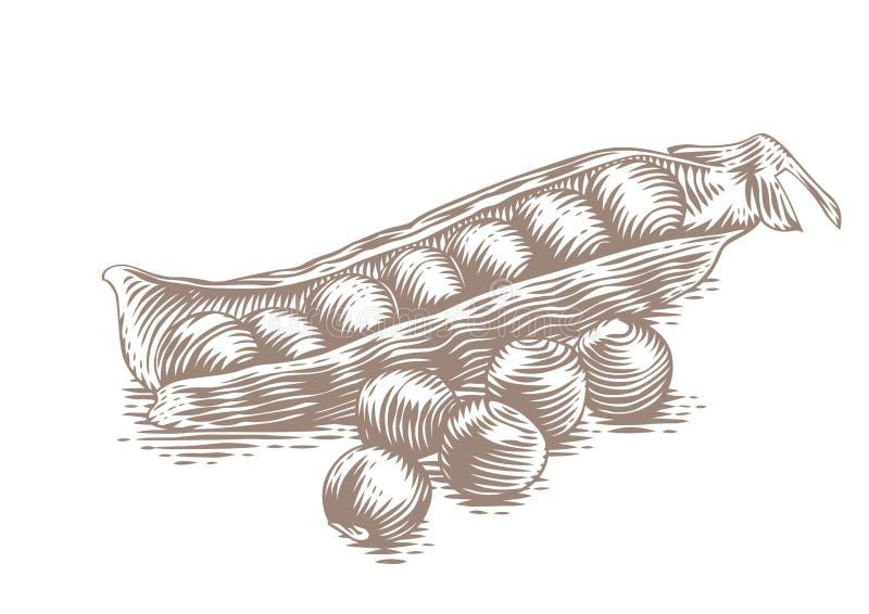 Cosse de pois avec des pois illustration de vecteur