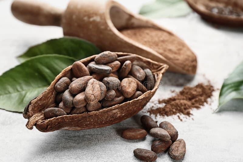 Cosse mûre de cacao avec des haricots photographie stock