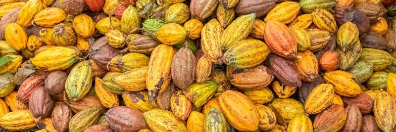 Cosses de cacao images stock