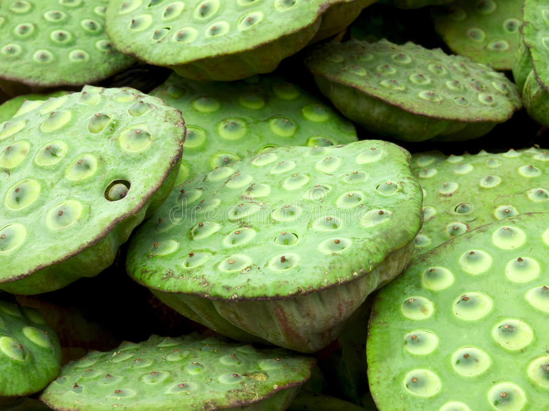 Cosses de graine de lotus photos libres de droits
