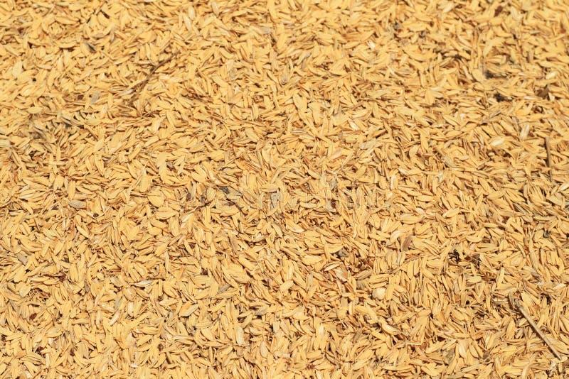 Cosses de riz des paillettes images stock