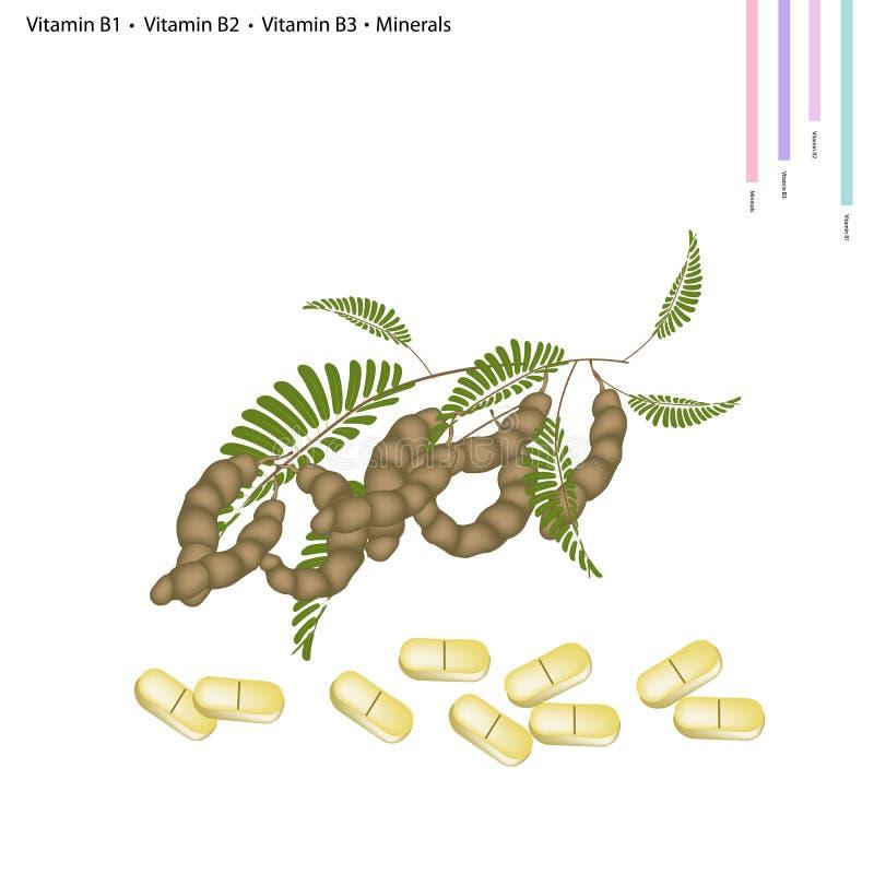 Cosses de tamarinier avec la vitamine B1, B2, B3 et minerais illustration stock