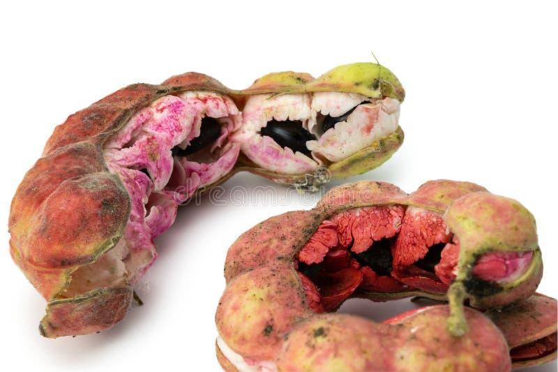 Cosses de tamarinier de Manille photos stock