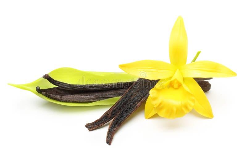Cosses de vanille et fleur d'orchidée photographie stock libre de droits