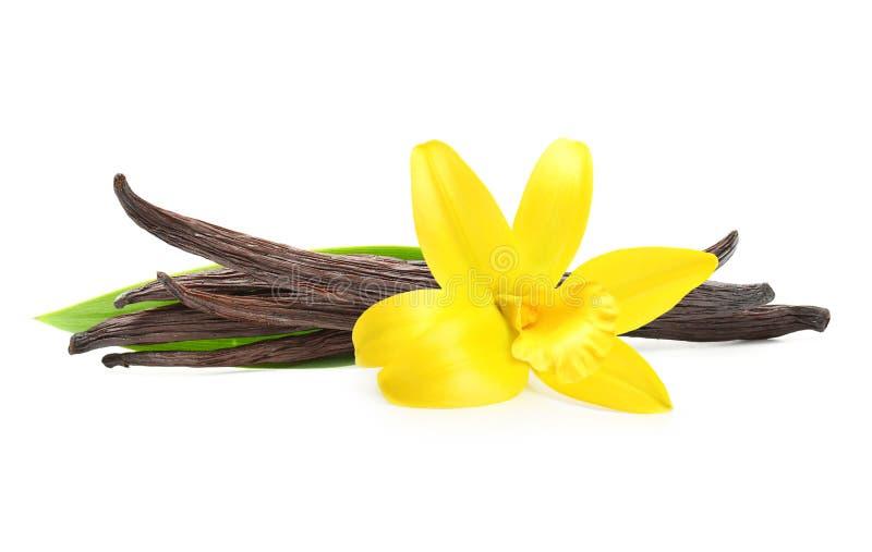 Cosses de vanille et fleur d'orchidée photographie stock