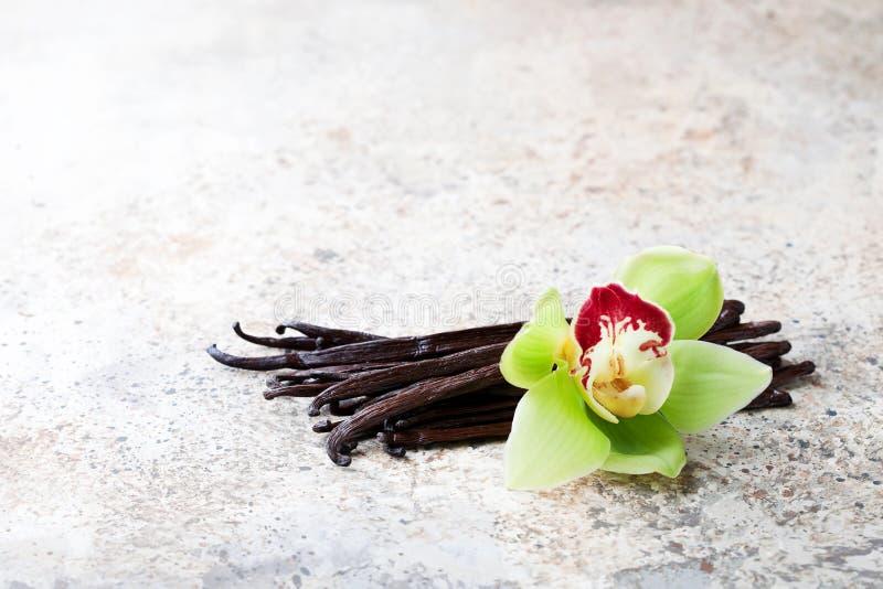 Cosses de vanille et fleur d'orchidée photos libres de droits