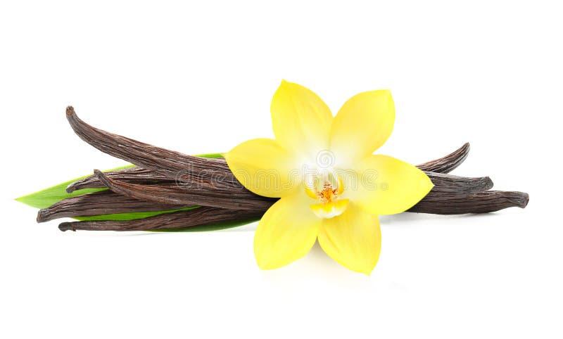 Cosses de vanille et fleur d'orchidée d'isolement photographie stock libre de droits