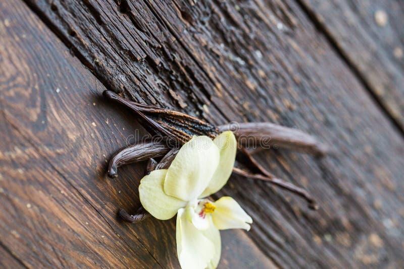 Cosses de vanille et fleur sèches de vanille d'orchidée sur le fond en bois vanille images libres de droits