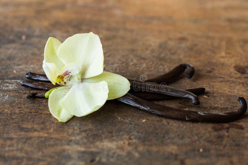 Cosses de vanille et fleurs sèches de vanille d'orchidée sur le fond blanc vanille photo libre de droits