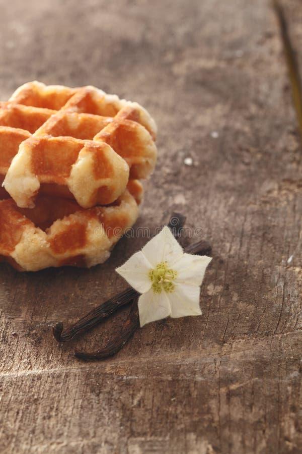 Cosses et fleur de vanille images libres de droits