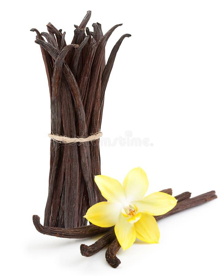 Cosses et fleur de vanille d'isolement photos libres de droits