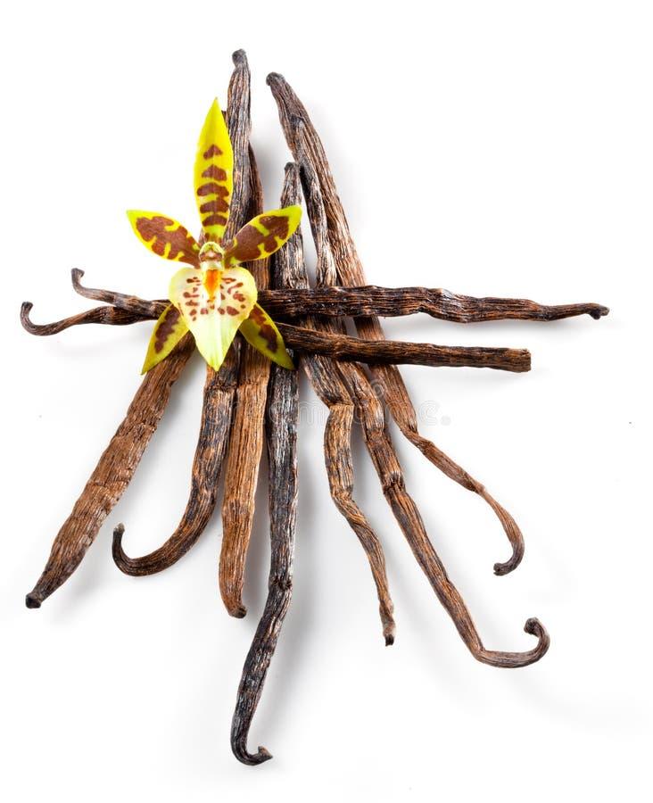 Cosses et fleur de vanille d'isolement sur le blanc photographie stock libre de droits