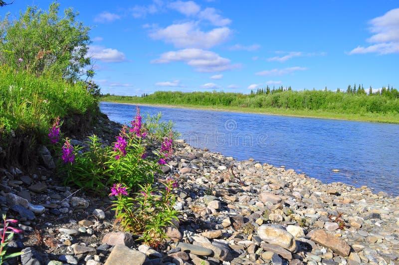Costa al norte del río en verano imagen de archivo libre de regalías