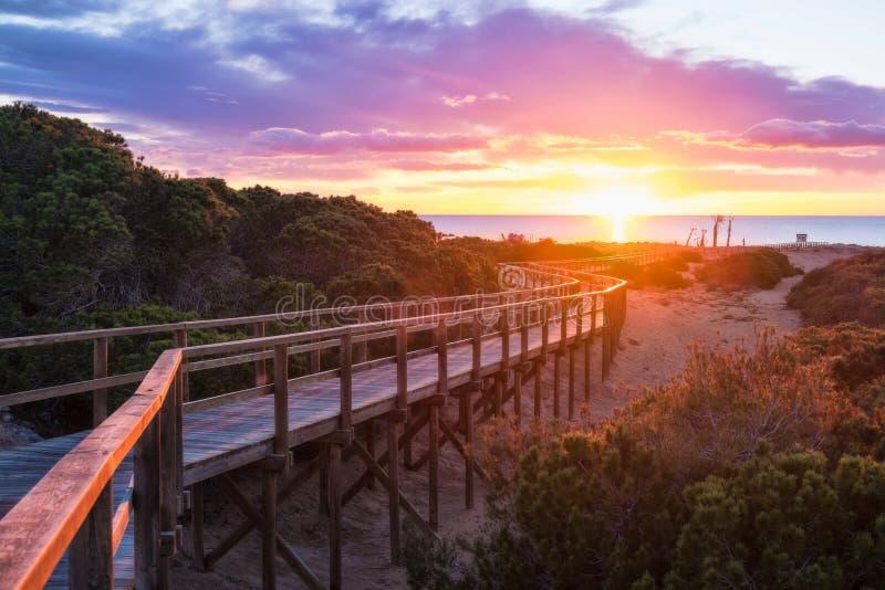 Costa Blanca sunrise. Sunrise on pine forested Santa Pola beach, Costa Blanca, Spain royalty free stock photography