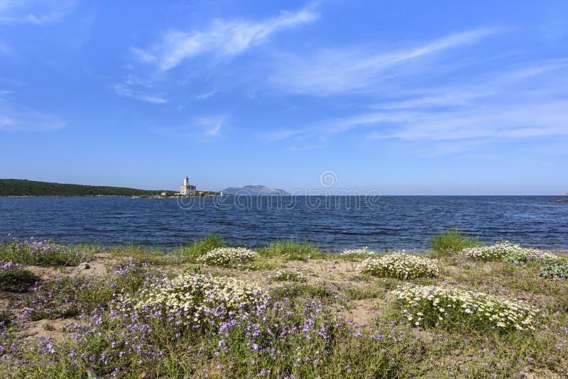 Costa con las flores y el faro en el fondo, playa de Lido del Sole, Olbia, Cerdeña, Italia de Bocca fotografía de archivo