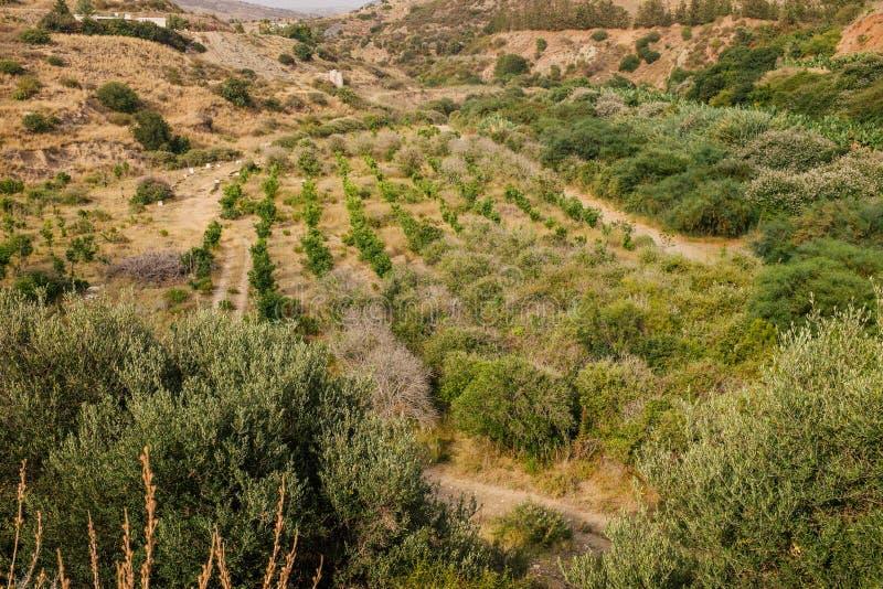 Costa costa y prados Chipre fotografía de archivo libre de regalías