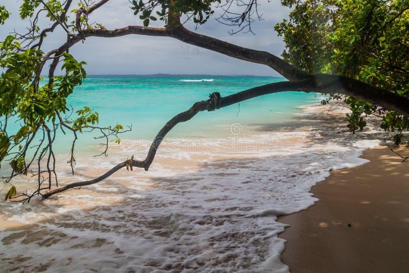 Costa da ilha de Isla Zapatilla, parte do arquipélago de Toro do del de Bocas, Pana fotos de stock royalty free