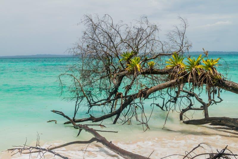 Costa da ilha de Isla Zapatilla, parte do arquipélago de Toro do del de Bocas, Pana imagens de stock