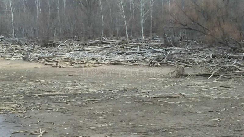 Costa da madeira lançada à costa fotografia de stock