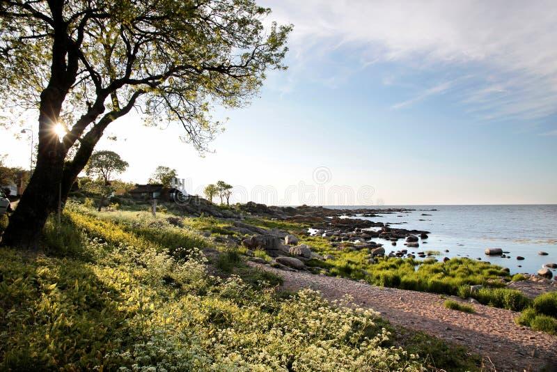 Costa de Bornholm imagens de stock royalty free