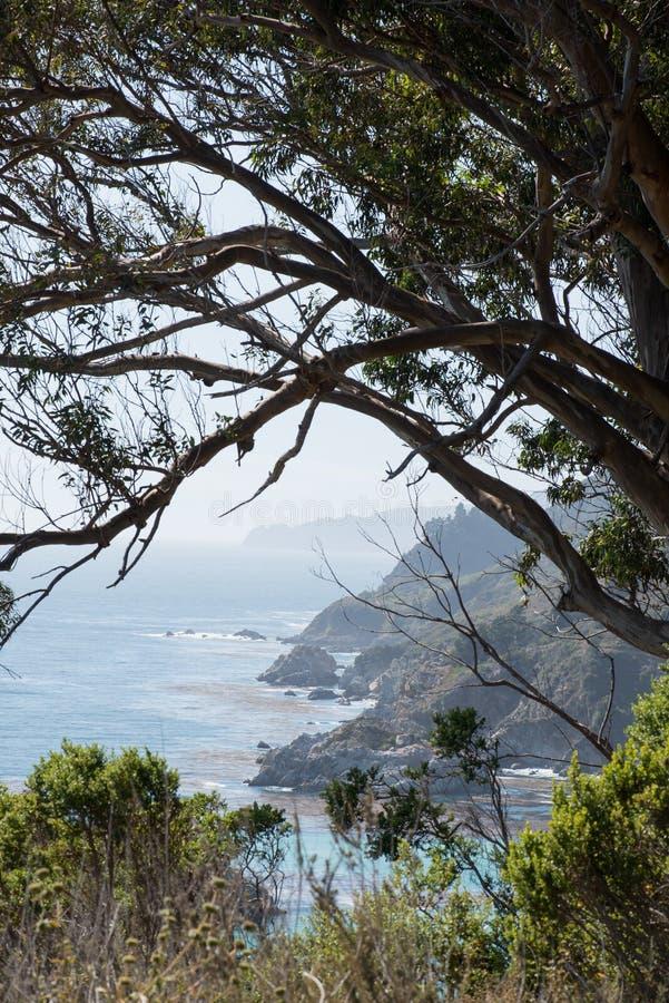 Costa de California con enmarcar del árbol foto de archivo libre de regalías