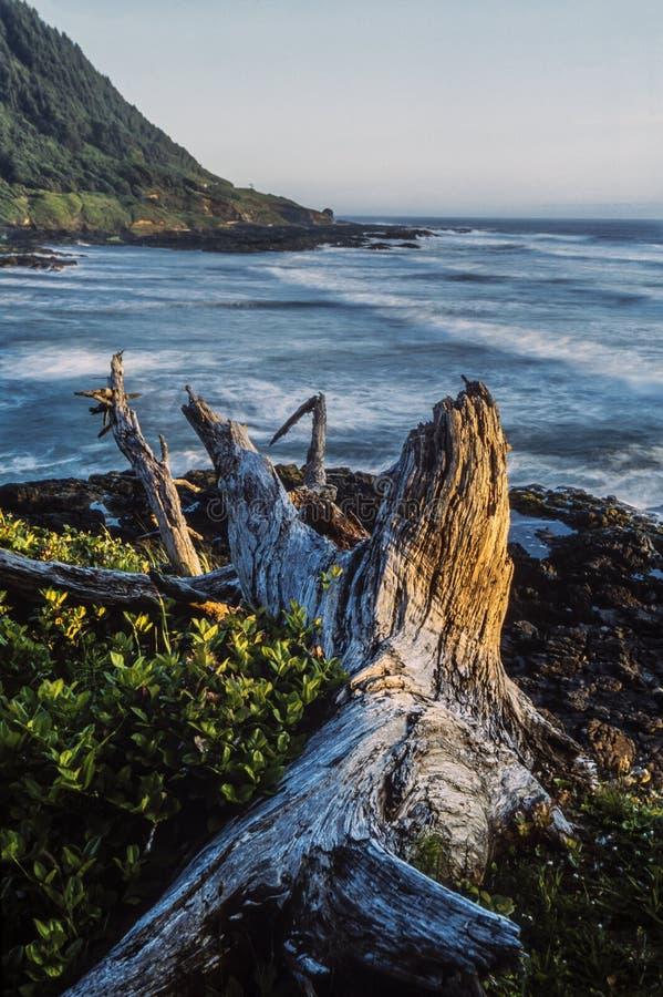 Costa de California septentrional fotografía de archivo libre de regalías