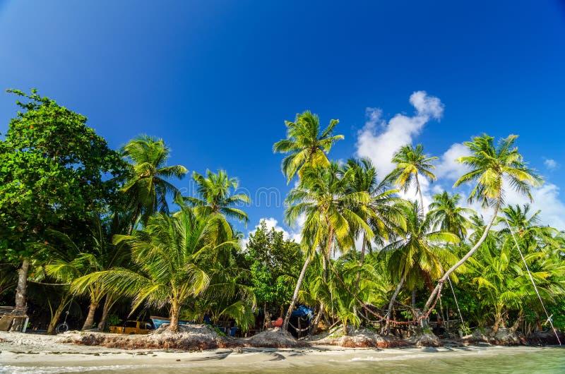 Costa de la palmera fotos de archivo libres de regalías