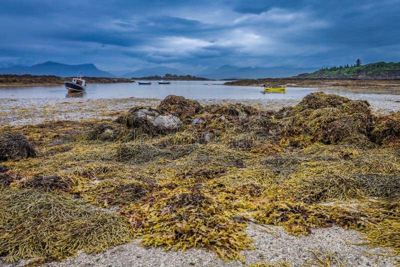 Costa costa de las algas y piedras negras durante la bajamar, Escocia imagen de archivo libre de regalías