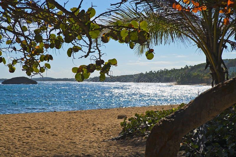 Costa de ManatÃ, Puerto Rico fotografía de archivo libre de regalías