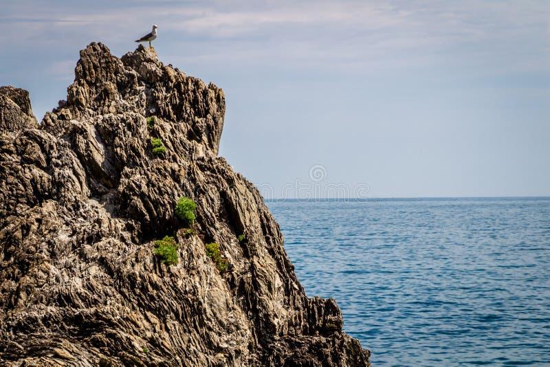 Costa de mar, égua do al de Monterosso, Cinque Terre, Itália imagens de stock