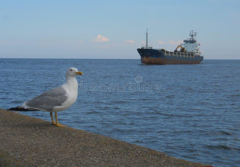 Costa de mar imagem de stock royalty free