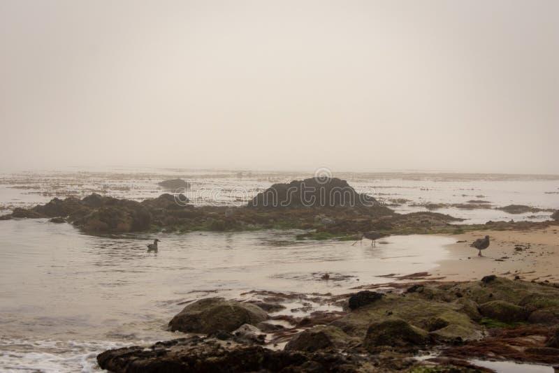Costa de Monterey fotografia de stock royalty free