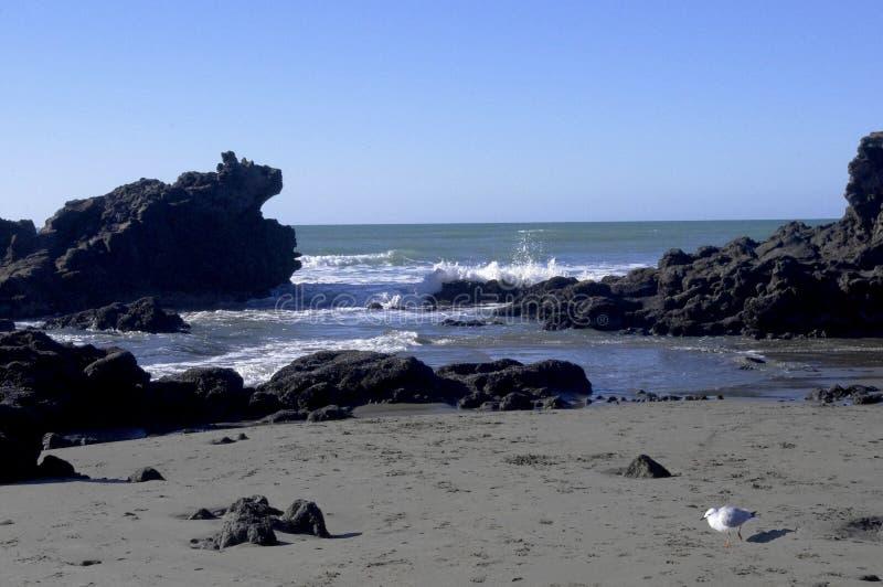 Costa de Nueva Zelanda foto de archivo