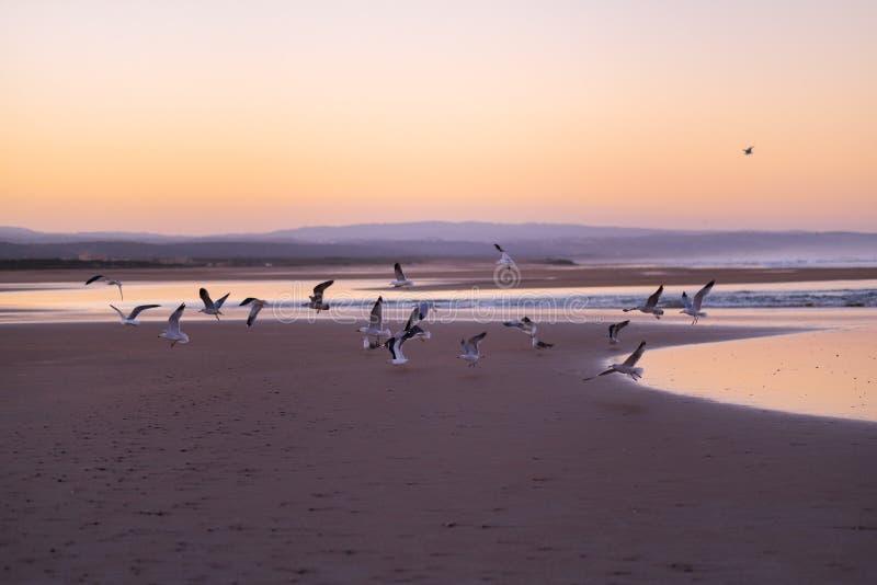 Costa de Sidi Kaouki, Marrocos, África Tempo do por do sol de Marrocos cidade da ressaca maravilhosamente imagem de stock