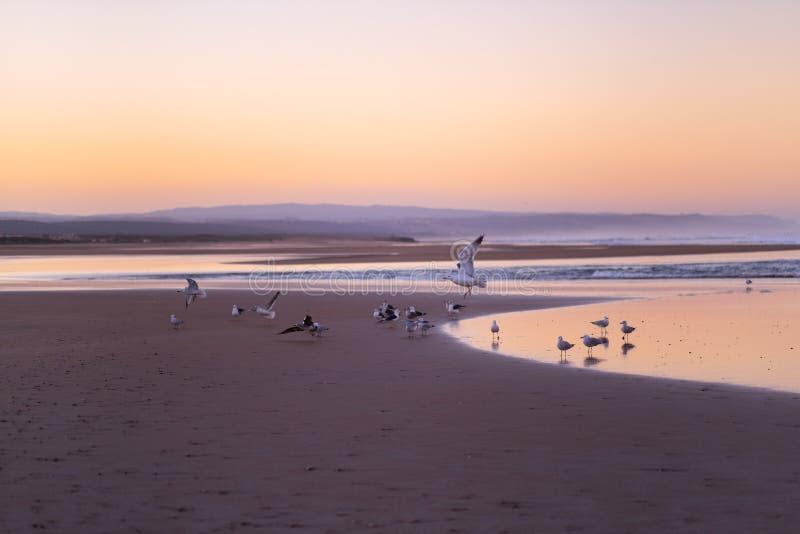 Costa de Sidi Kaouki, Marruecos, África Tiempo de la puesta del sol de Marruecos ciudad de la resaca maravillosamente fotos de archivo libres de regalías