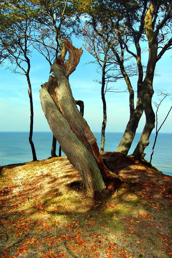Download Costa del bosque imagen de archivo. Imagen de lago, niebla - 1286363