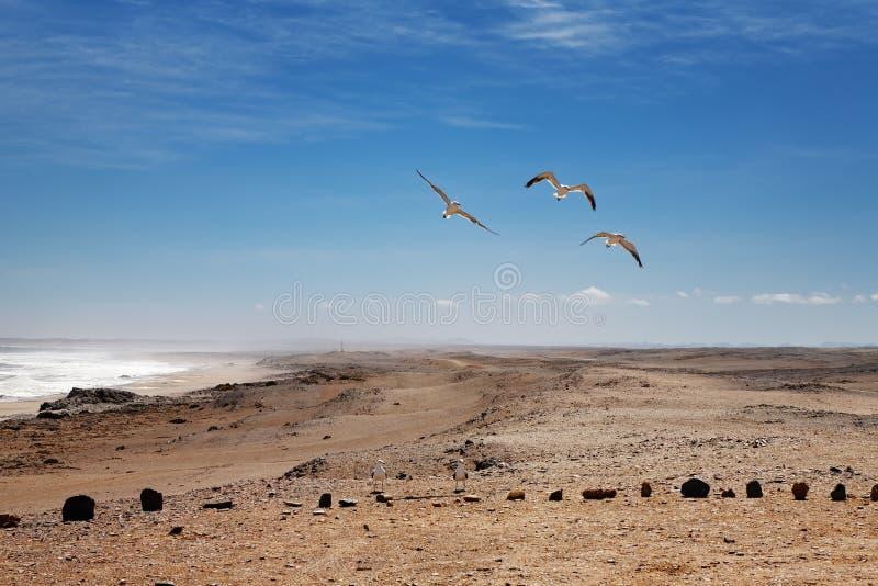 Costa del esqueleto, Namibia foto de archivo libre de regalías