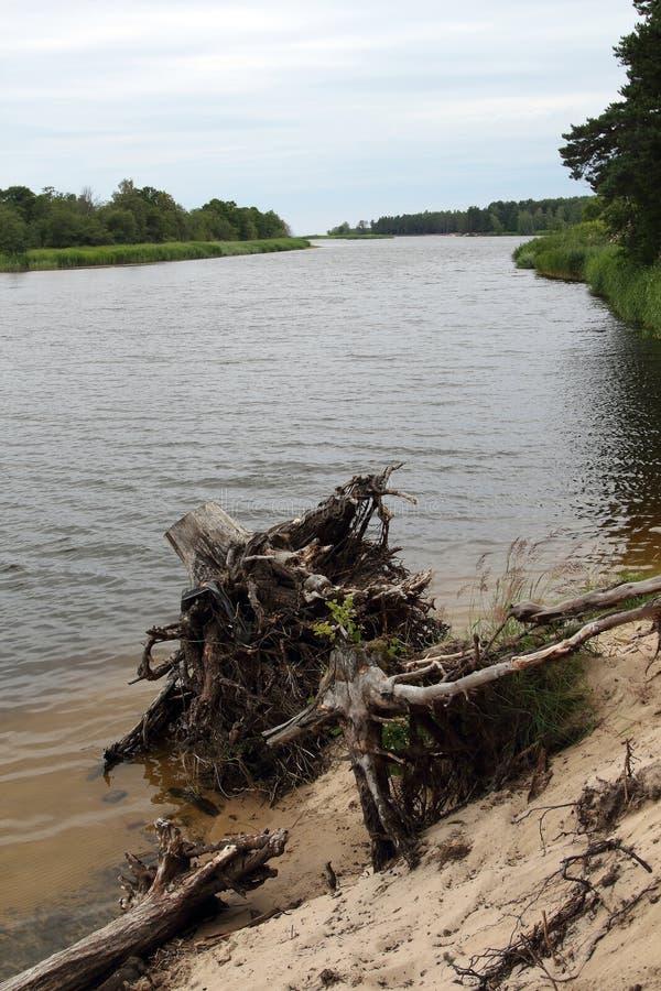 Costa del fiume di Gauja fotografia stock